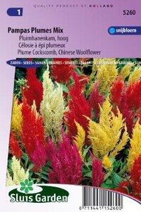 Celosia argentea plumosa -Pampas Plumes Mix