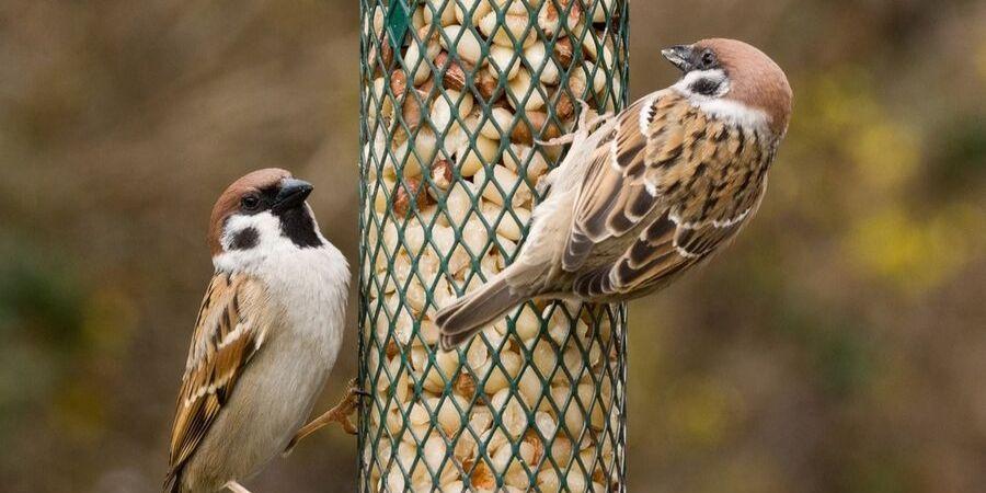 Vogelvoer_Tuingoedkoop.nl