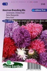 Aster chinensis - American Branching Mix zaad bloemzaden