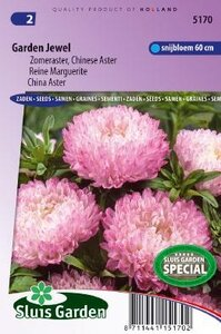 Aster chinensis - Garden Jewel zaad bloemzaden