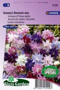 Aquilegia vulgaris - Granny's Bonnets mix zaad bloemzaden
