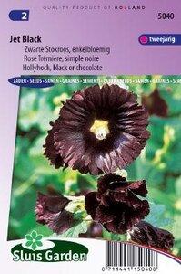 Alcea rosea - Nigra Jet Black zaad bloemzaden