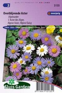 Aster alpinus -Alpenaster Mix zaad bloemzaden