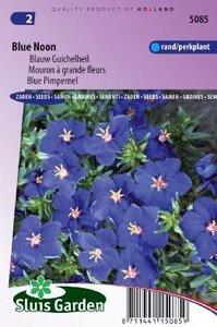 Anagallis monelli ssp. Linifolia - Blue Noon zaad bloemzaden