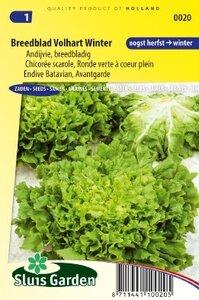 Andijvie Breedblad Volhart winter zaad, groentezaden