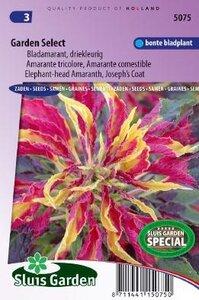 Amaranthus gangeticus -Garden Select zaad bloemzaden