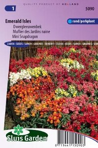 Antirrhinum majus pumilum - Emerald Isles zaad bloemzaden