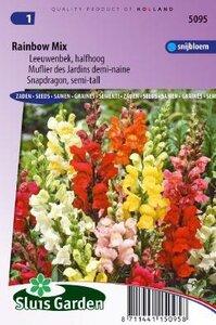 Antirrhinum majus nanum - Rainbow Mix zaad bloemzaden