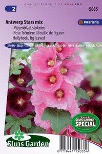 Alcea ficifolia - Antwerp Stars mix zaad bloemzaden