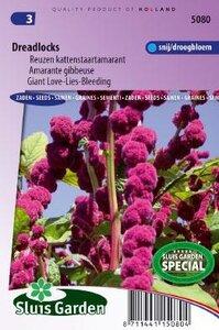Amaranthus caudatus gibbosus - Dreadlocks zaad bloemzaden