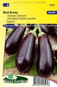 aubergine black beauty online kopen