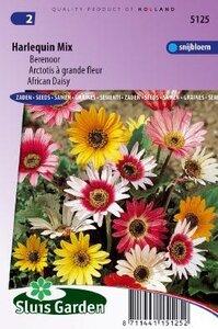 Arctotis acaulis - Harlequin Mix zaad bloemzaden
