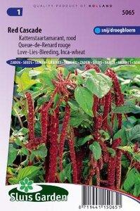 Amaranthus caudatus - Red Cascade zaad bloemzaden