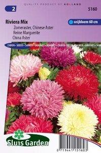 Aster chinensis - Riviera Mix zaad bloemzaden