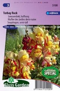 Antirrhinum majus nanum - Torbay Rock zaad bloemzaden