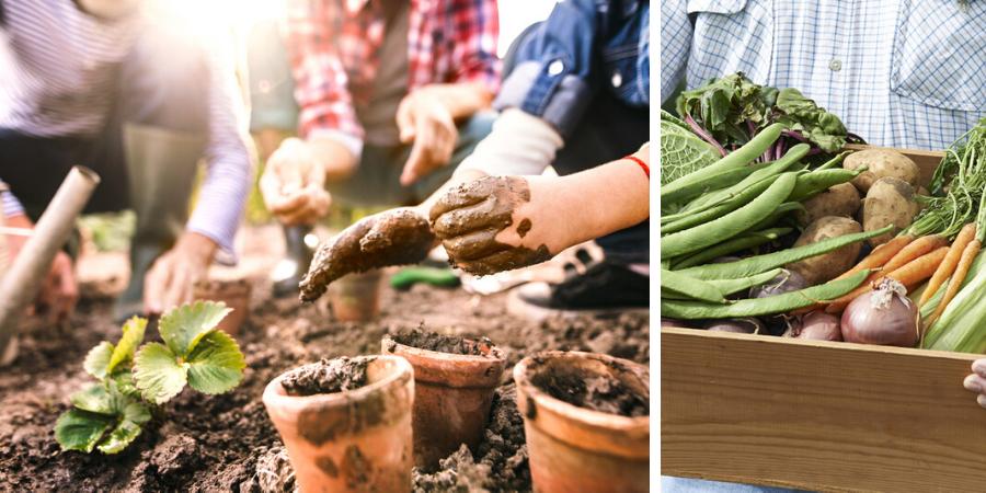 Kweken en zaaien Tuingoedkoop